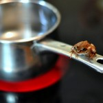 We are all boiling frogs, and it's time to escape the pan